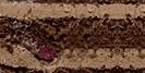 Бисквит с какао, шоколадный крем, вишня.