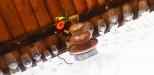 shokoladnyj-fontan-kiev